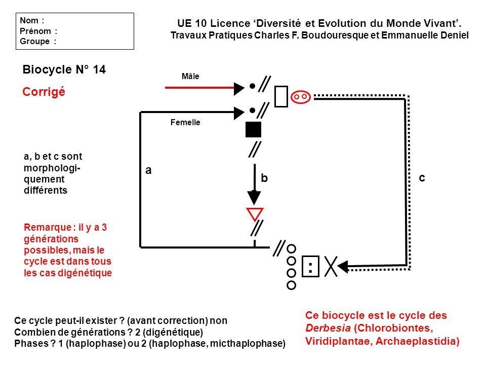 Ce cycle peut-il exister ? (avant correction) non Combien de générations ? 2 (digénétique) Phases ? 1 (haplophase) ou 2 (haplophase, micthaplophase) U