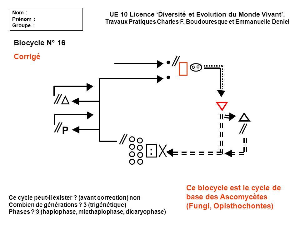 Ce cycle peut-il exister ? (avant correction) non Combien de générations ? 3 (trigénétique) Phases ? 3 (haplophase, micthaplophase, dicaryophase) UE 1