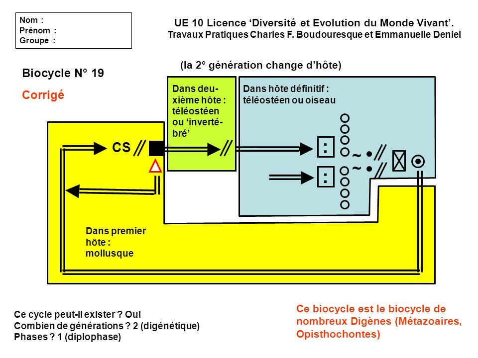 Ce cycle peut-il exister ? Oui Combien de générations ? 2 (digénétique) Phases ? 1 (diplophase) UE 10 Licence Diversité et Evolution du Monde Vivant.