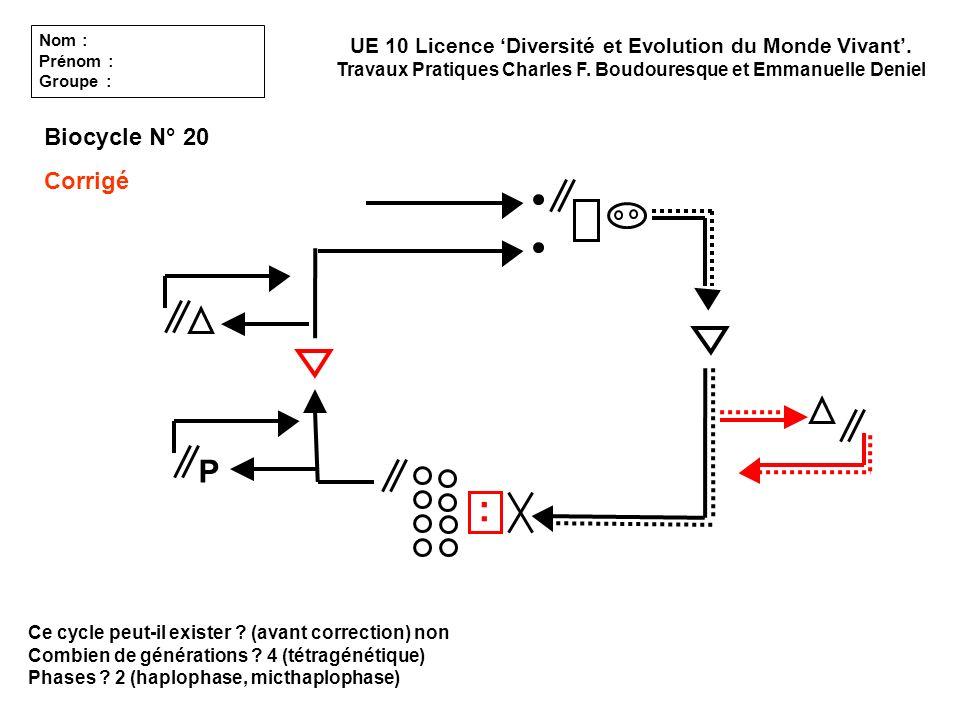 Ce cycle peut-il exister ? (avant correction) non Combien de générations ? 4 (tétragénétique) Phases ? 2 (haplophase, micthaplophase) UE 10 Licence Di