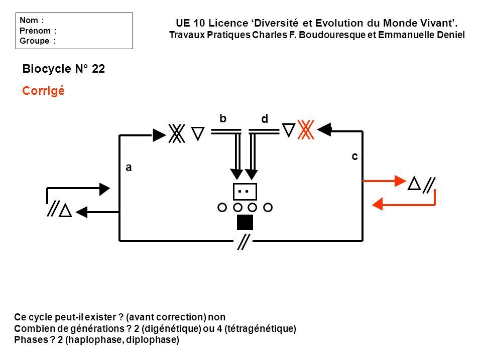 Ce cycle peut-il exister ? (avant correction) non Combien de générations ? 2 (digénétique) ou 4 (tétragénétique) Phases ? 2 (haplophase, diplophase) U