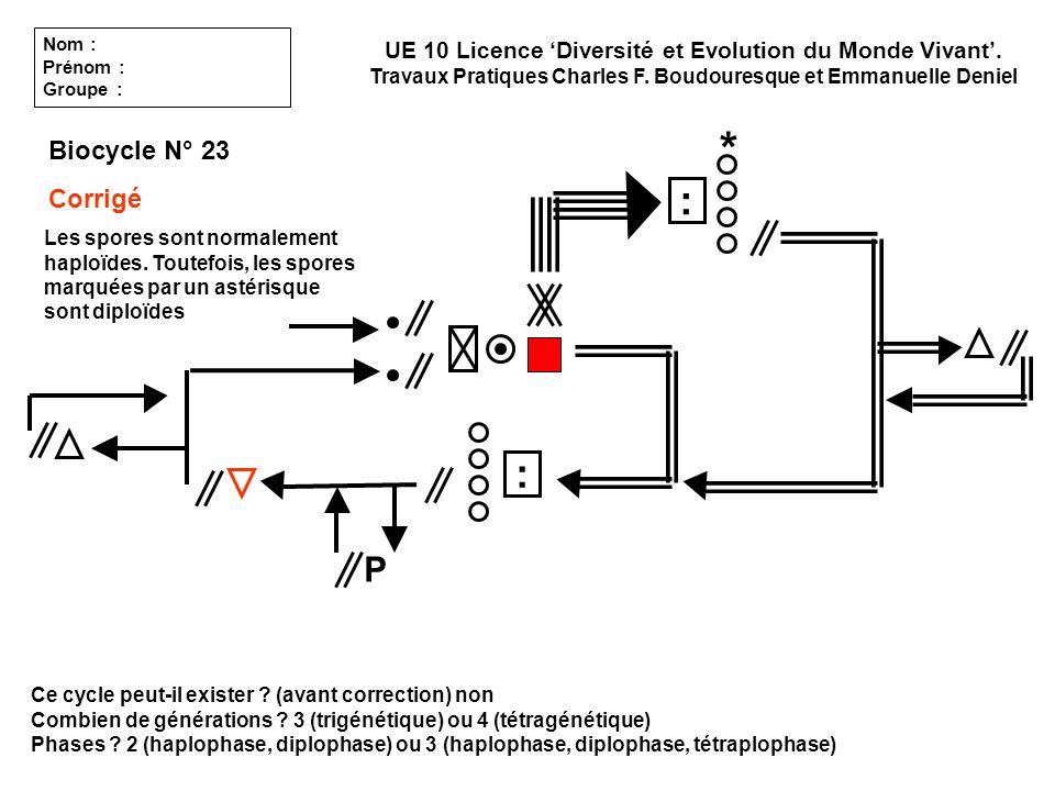 Ce cycle peut-il exister ? (avant correction) non Combien de générations ? 3 (trigénétique) ou 4 (tétragénétique) Phases ? 2 (haplophase, diplophase)