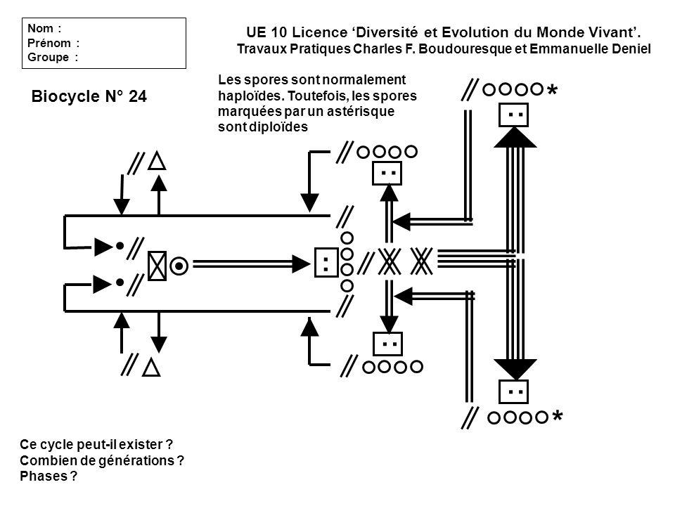 Ce cycle peut-il exister ? Combien de générations ? Phases ? Biocycle N° 24 : : : : : UE 10 Licence Diversité et Evolution du Monde Vivant. Travaux Pr