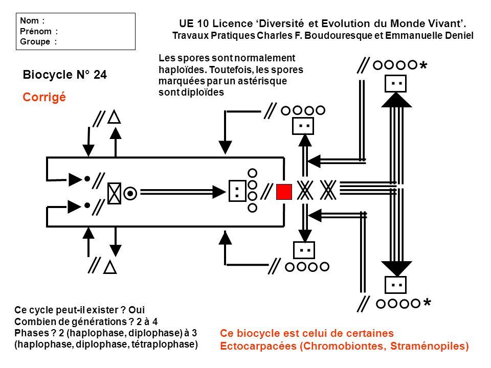 Ce cycle peut-il exister ? Oui Combien de générations ? 2 à 4 Phases ? 2 (haplophase, diplophase) à 3 (haplophase, diplophase, tétraplophase) Biocycle