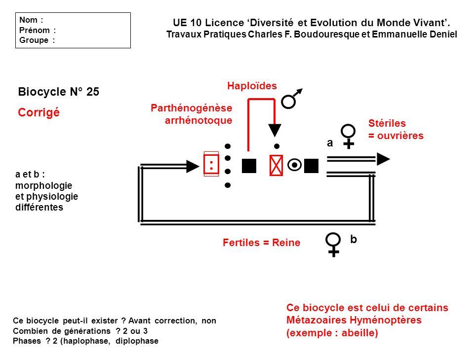 Biocycle N° 25 Corrigé Ce biocycle peut-il exister ? Avant correction, non Combien de générations ? 2 ou 3 Phases ? 2 (haplophase, diplophase a b a et