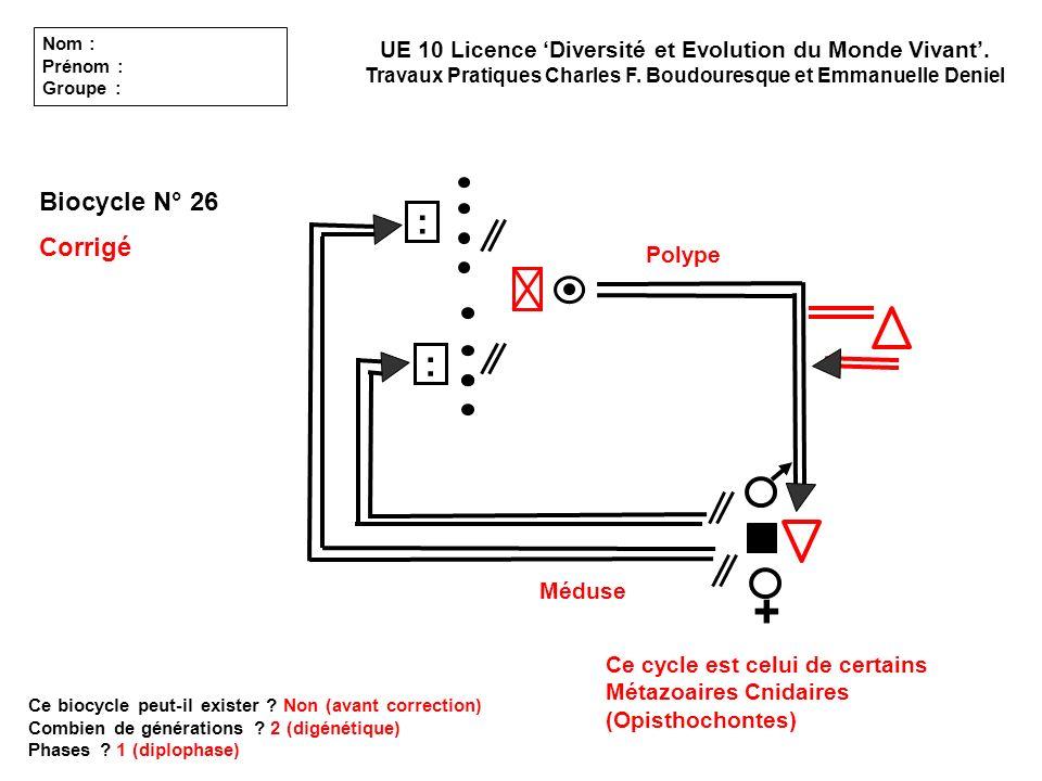 Biocycle N° 26 Corrigé Ce biocycle peut-il exister ? Non (avant correction) Combien de générations ? 2 (digénétique) Phases ? 1 (diplophase) UE 10 Lic