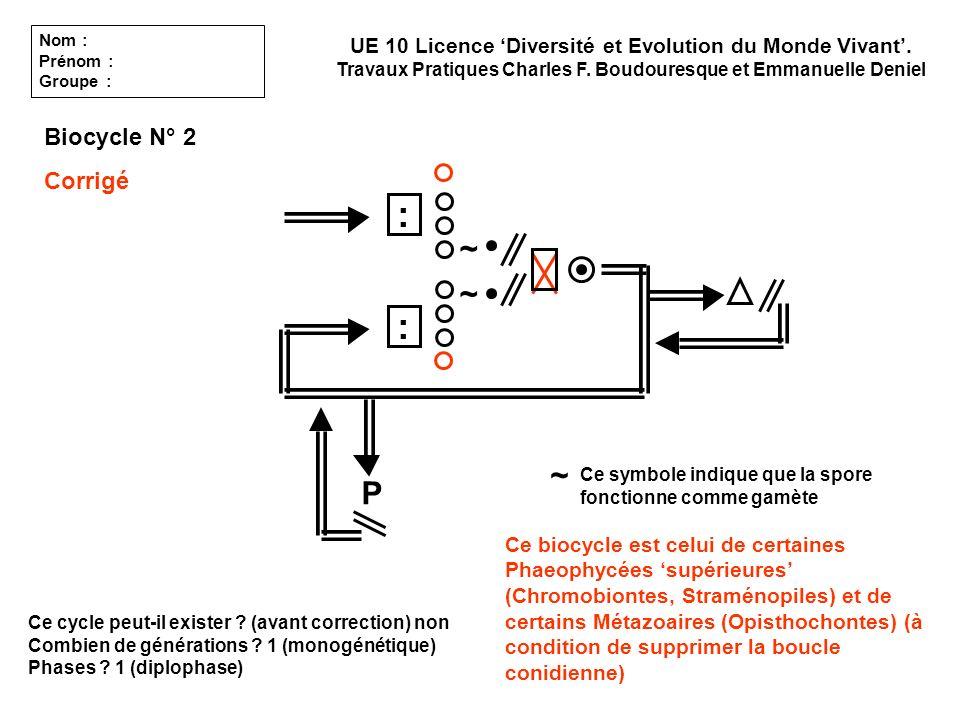 Ce cycle peut-il exister ? (avant correction) non Combien de générations ? 1 (monogénétique) Phases ? 1 (diplophase) UE 10 Licence Diversité et Evolut