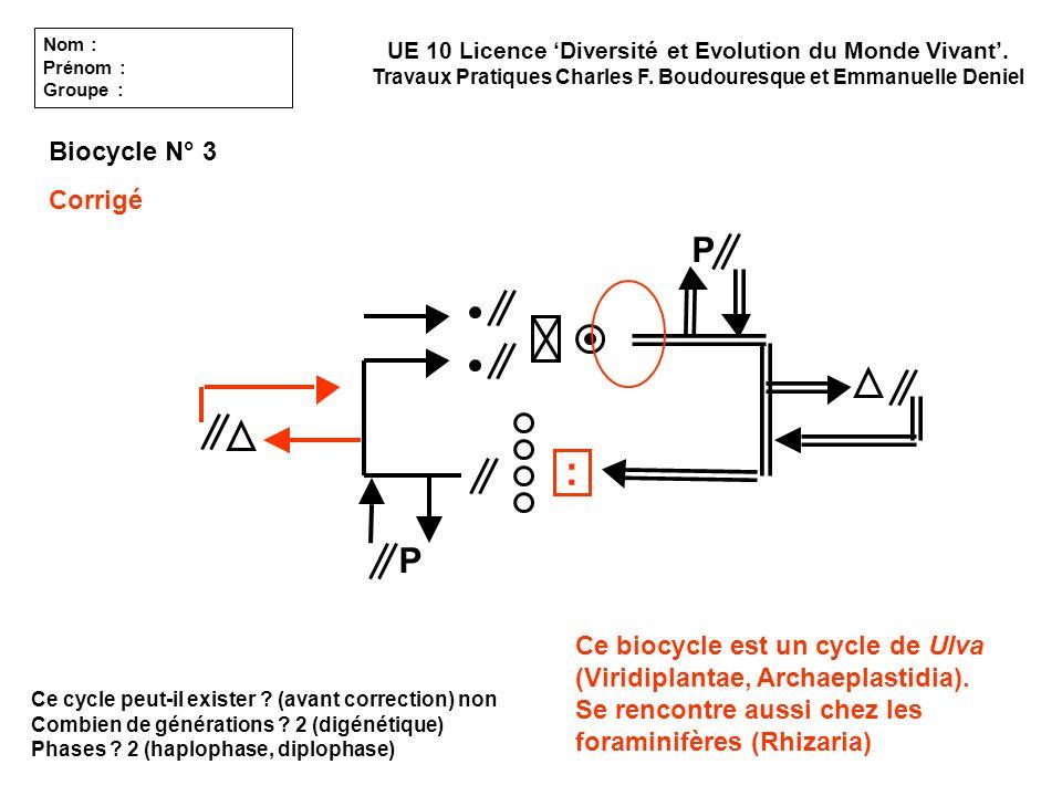 Ce cycle peut-il exister ? (avant correction) non Combien de générations ? 2 (digénétique) Phases ? 2 (haplophase, diplophase) UE 10 Licence Diversité