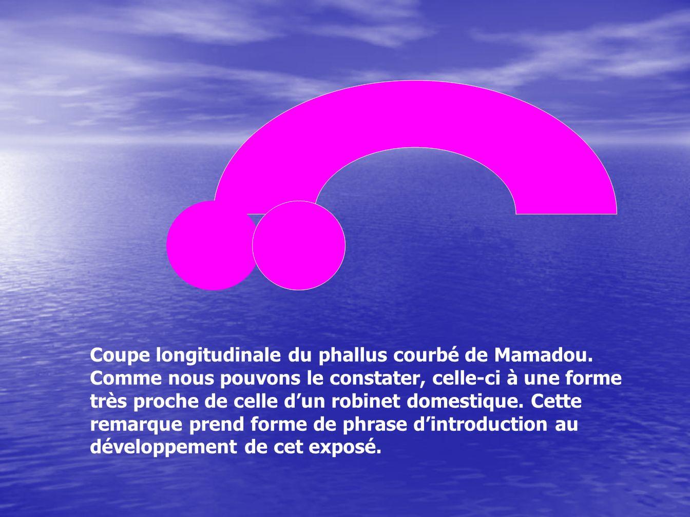 Coupe longitudinale du phallus courbé de Mamadou. Comme nous pouvons le constater, celle-ci à une forme très proche de celle dun robinet domestique. C