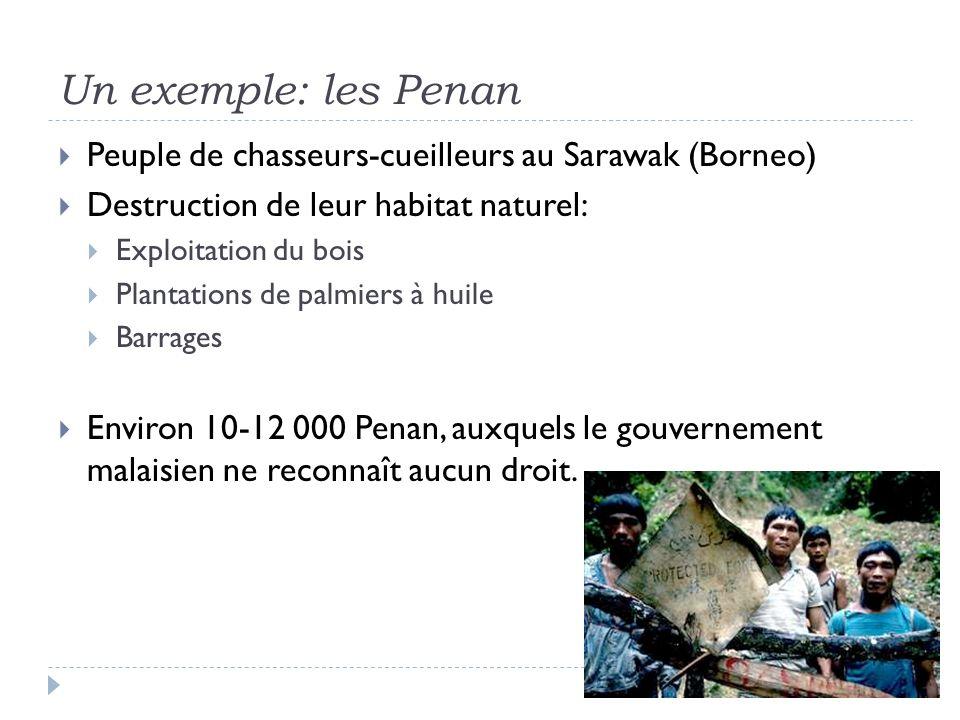 Un exemple: les Penan Peuple de chasseurs-cueilleurs au Sarawak (Borneo) Destruction de leur habitat naturel: Exploitation du bois Plantations de palm