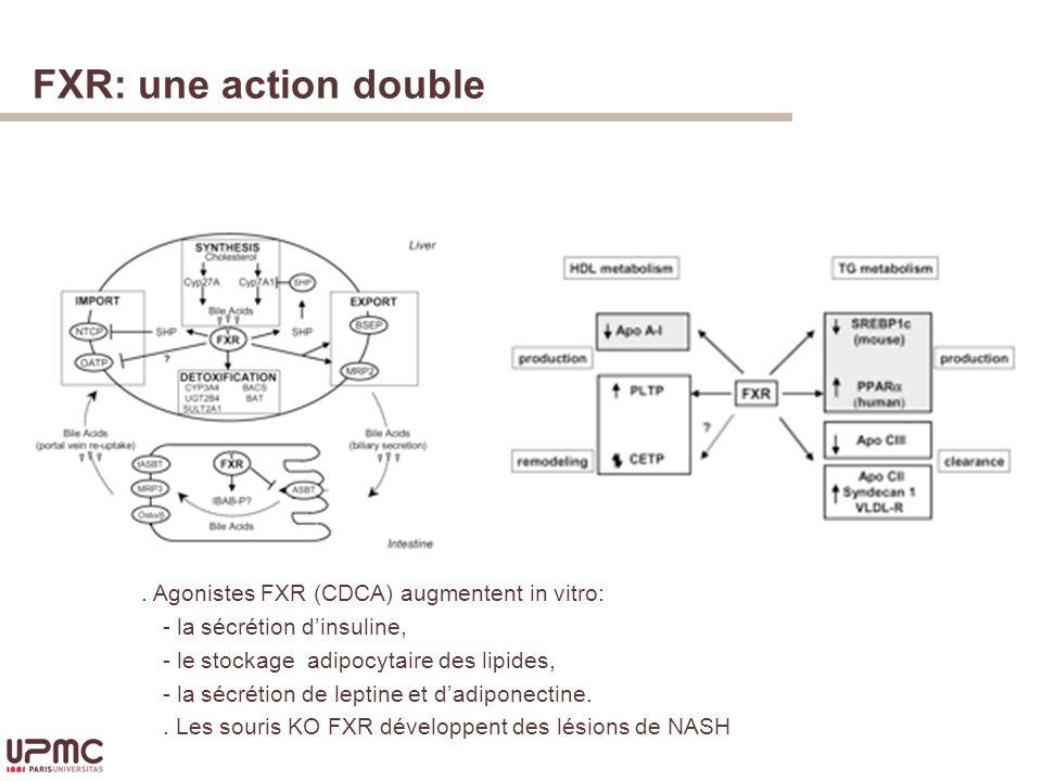 FXR: une action double Homéostasie des acides biliairesMétabolisme lipidique.