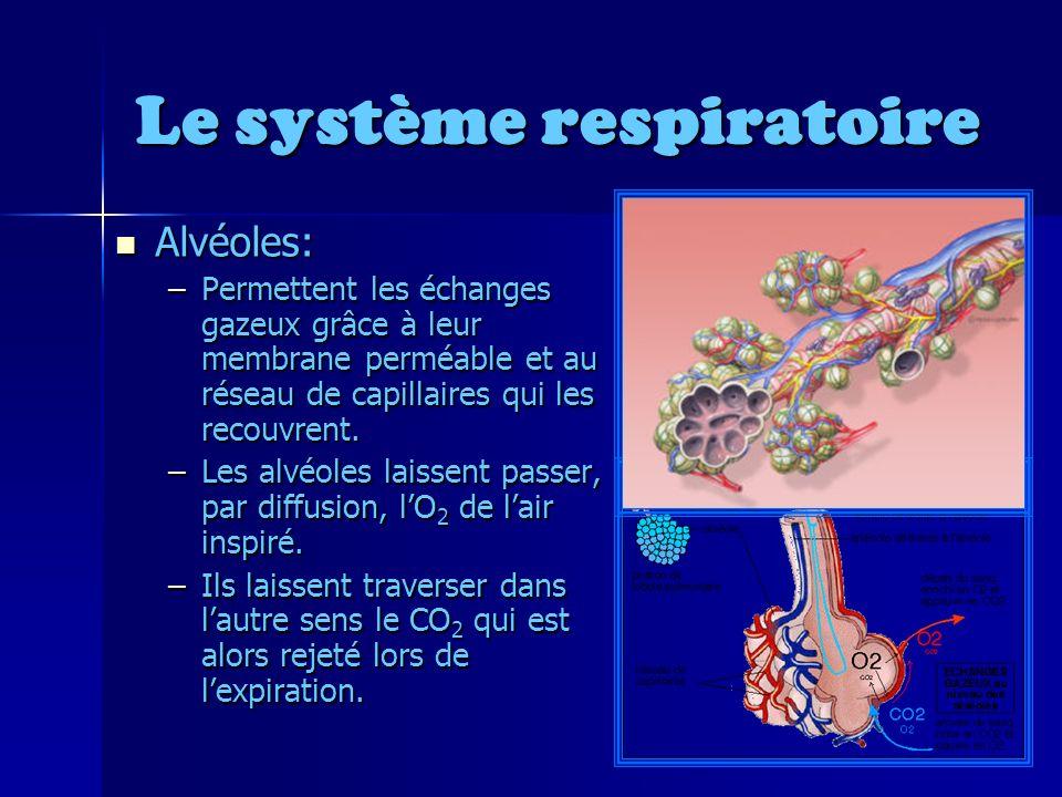 Le système respiratoire Alvéoles: Alvéoles: –Permettent les échanges gazeux grâce à leur membrane perméable et au réseau de capillaires qui les recouvrent.