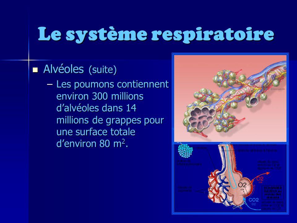 Le système respiratoire Alvéoles (suite) Alvéoles (suite) –Les poumons contiennent environ 300 millions dalvéoles dans 14 millions de grappes pour une surface totale denviron 80 m 2.