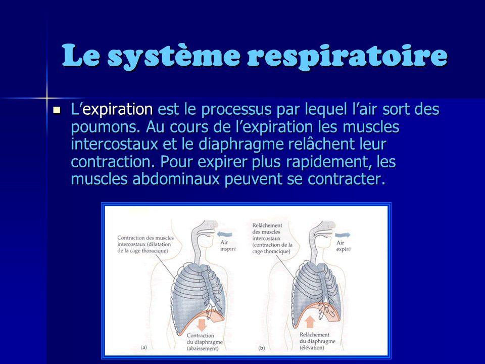 Le système respiratoire Lexpiration est le processus par lequel lair sort des poumons.