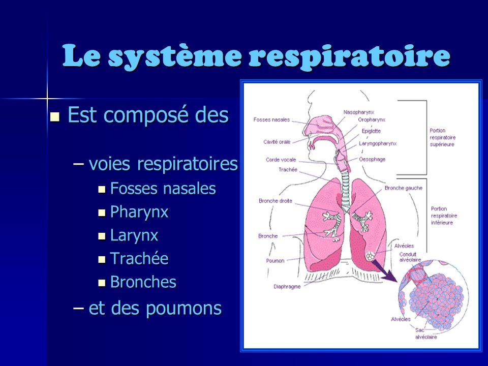 Le système respiratoire Est composé des Est composé des –voies respiratoires Fosses nasales Fosses nasales Pharynx Pharynx Larynx Larynx Trachée Trachée Bronches Bronches –et des poumons