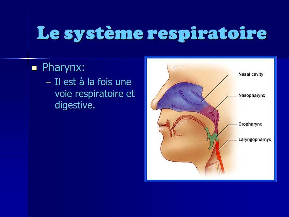 Le système respiratoire Pharynx: Pharynx: –Il est à la fois une voie respiratoire et digestive.