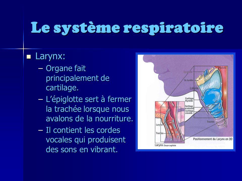 Le système respiratoire Larynx: Larynx: –Organe fait principalement de cartilage.