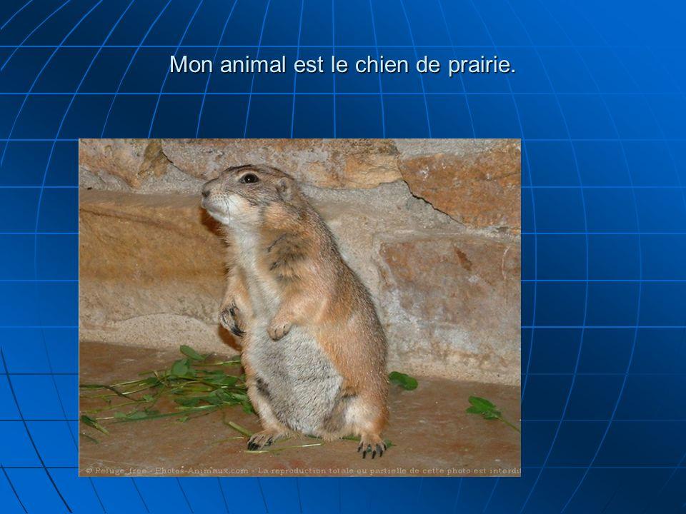 Le chien de prairie habite au Sud de la Saskatchewan, jusquen Oklahoma et au Texas.