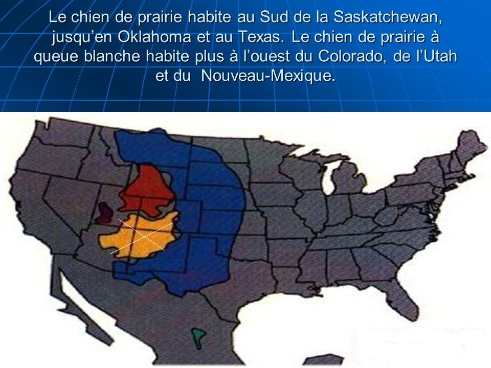 Le chien de prairie habite au Sud de la Saskatchewan, jusquen Oklahoma et au Texas. Le chien de prairie à queue blanche habite plus à louest du Colora