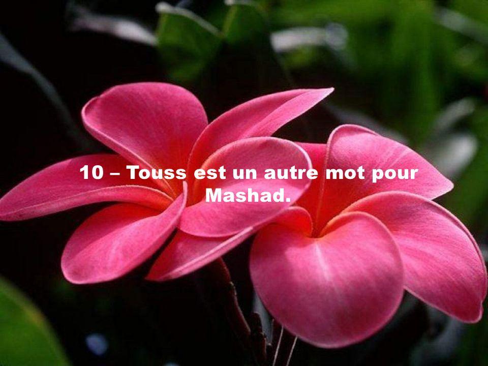 10 – Touss est un autre mot pour Mashad.