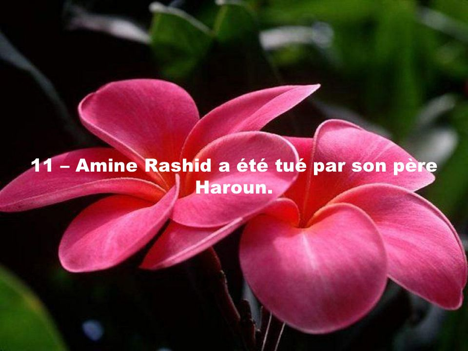 11 – Amine Rashid a été tué par son père Haroun.