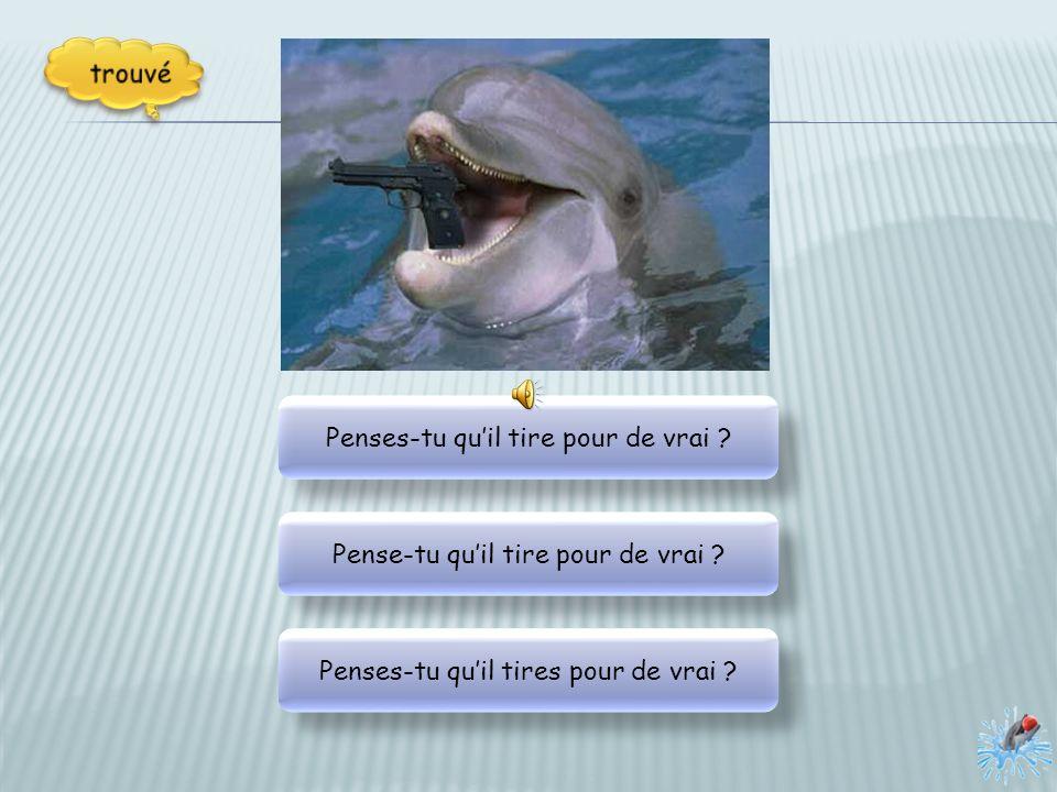 Les dauphins plongent et vives en groupe. Les dauphins plongent et vivent en groupe. Les dauphins plongent et vivent en groupe. Les dauphins plongent