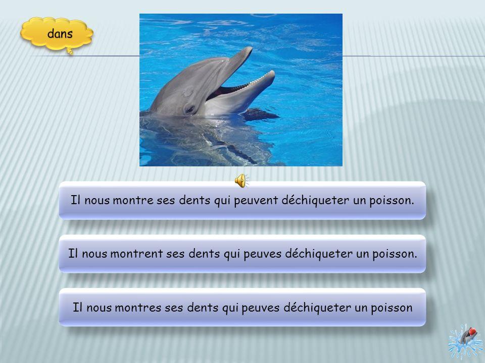 Euh, un étrange dauphin arrives ! Euh, un étrange dauphin arrive ! Euh, un étrange dauphin arrive ! Euh, un étrange dauphin arrivent !