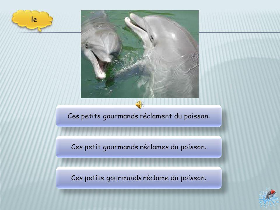 Il nous montre ses dents qui peuvent déchiqueter un poisson. Il nous montre ses dents qui peuvent déchiqueter un poisson. Il nous montrent ses dents q