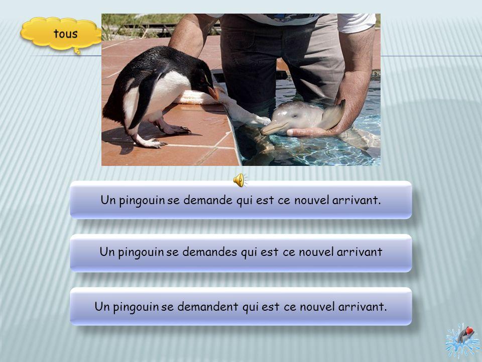 Un soigneur donne le biberon à un petit dauphin échoué sur une plage. Un soigneur donne le biberon à un petit dauphin échoué sur une plage. Un soigneu