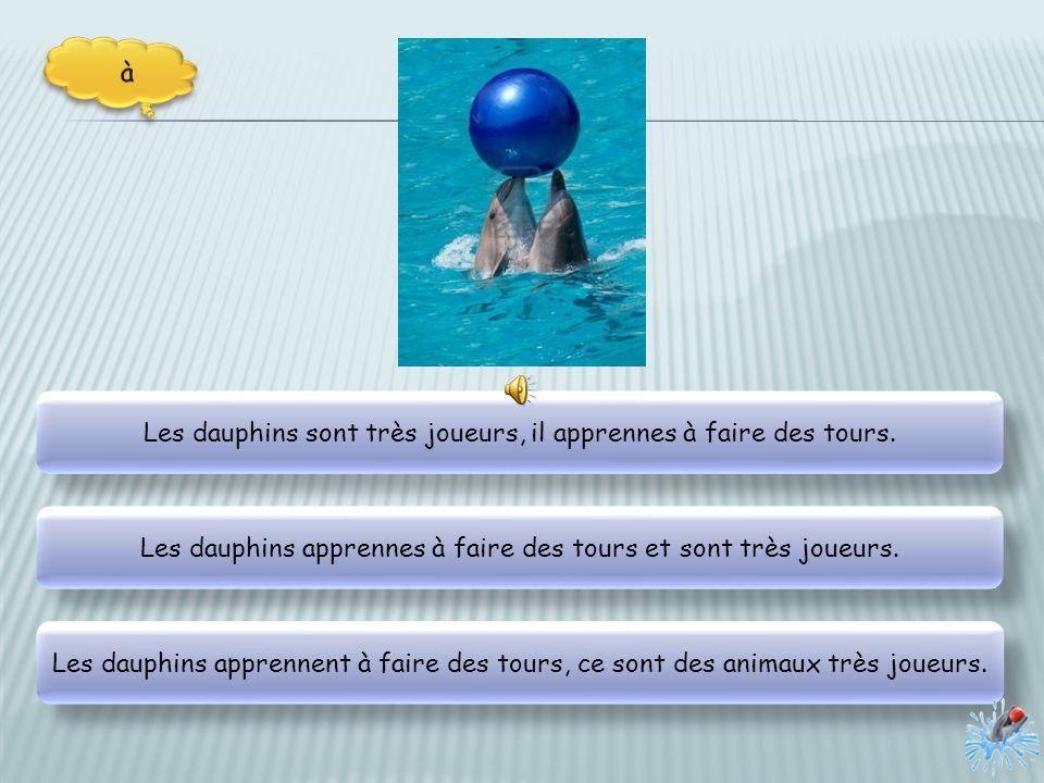 Une sirène plongent parmi les dauphins qui laccompagnes. Une sirène accompagnes les dauphins qui plongent. La sirène plonge et les dauphins laccompagn