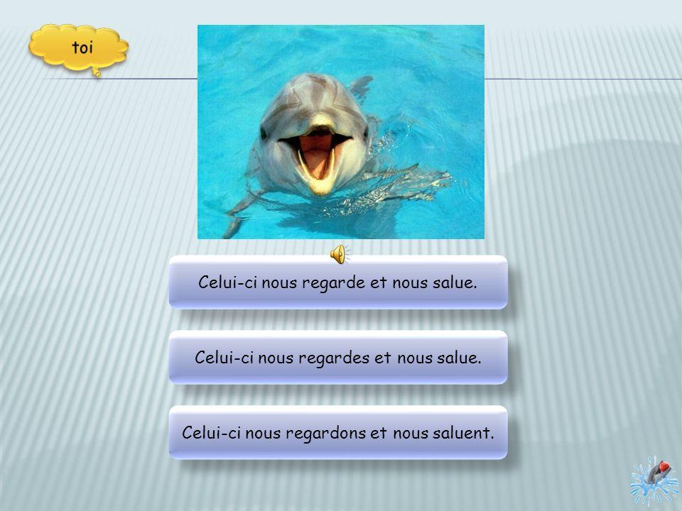 Les dauphins sont très joueurs, il apprennes à faire des tours. Les dauphins apprennes à faire des tours et sont très joueurs. Les dauphins apprennent