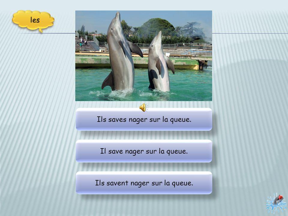 Mais, ma parole, le premier dauphin volent et planent .