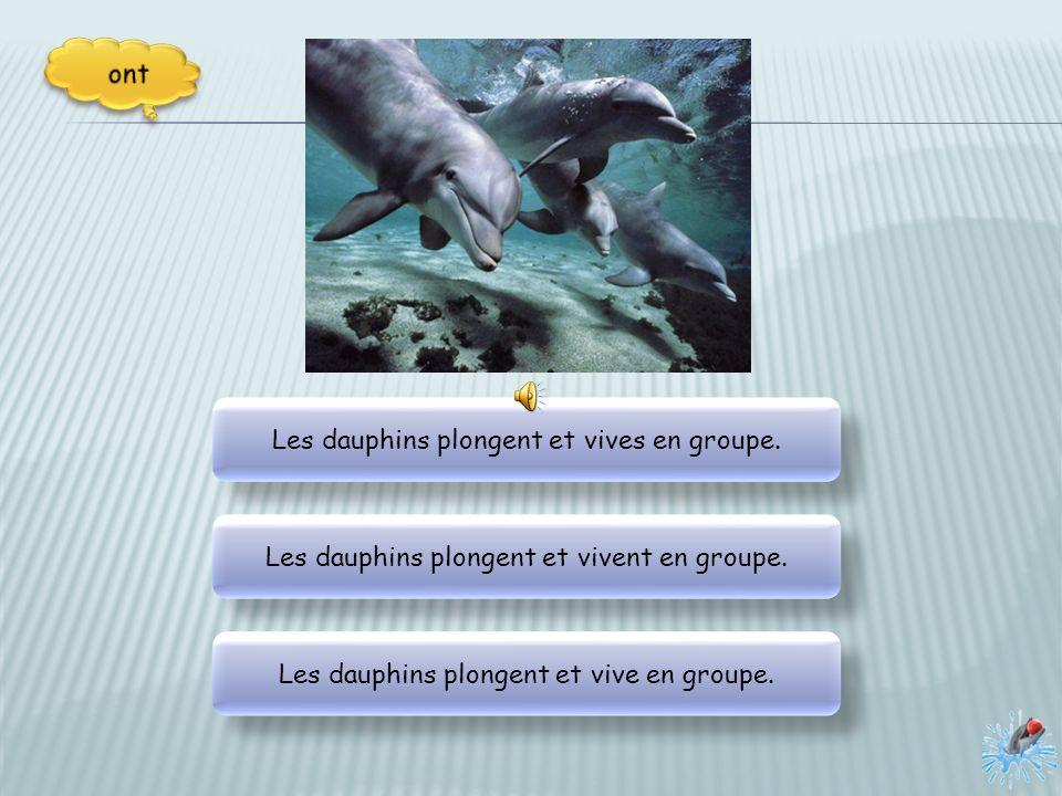 Les dauphins plongent et vives en groupe.Les dauphins plongent et vivent en groupe.