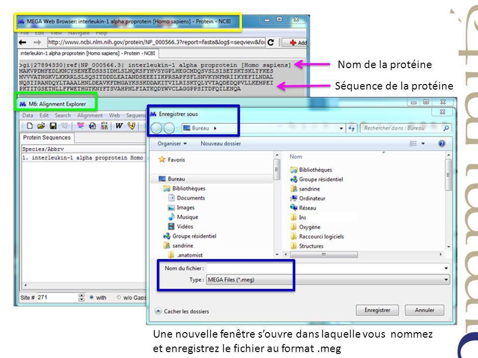 Nom de la protéine Séquence de la protéine Une nouvelle fenêtre souvre dans laquelle vous nommez et enregistrez le fichier au format.meg