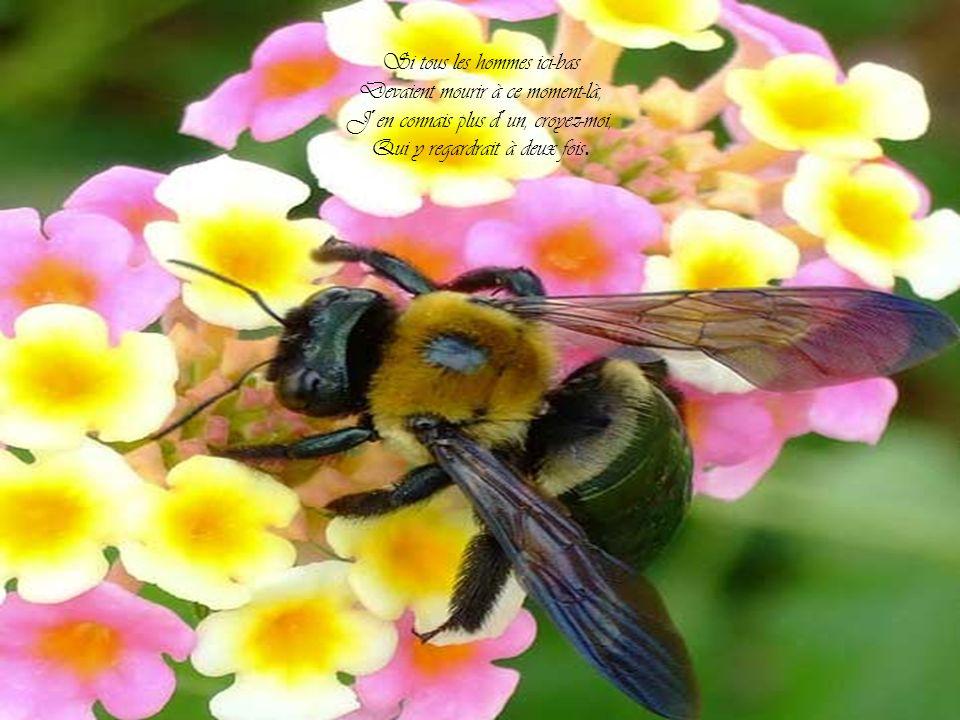 Bzz, bzz, bzz, Bzz, bzz, bzz, vaches d´abeilles!
