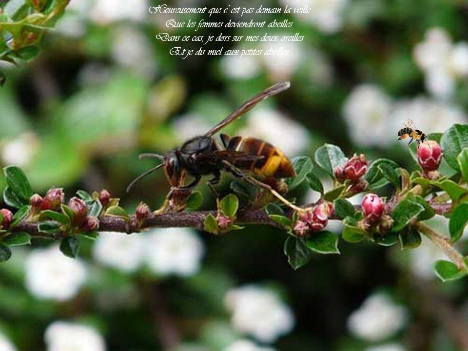 Bzz, bzz, bzz, Bzz, bzz, bzz, à d´autres!