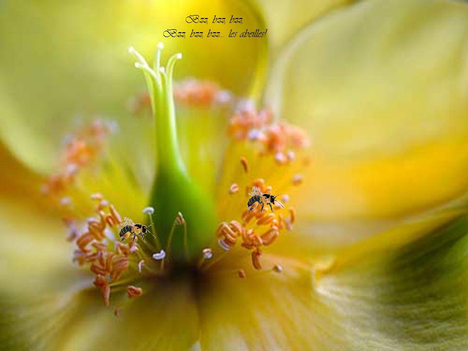 L´essaim se gonfle et s´abandonne A la caresse du printemps Et, dans la ruche, tourbillonnent, Prêtes à prendre leur élan,