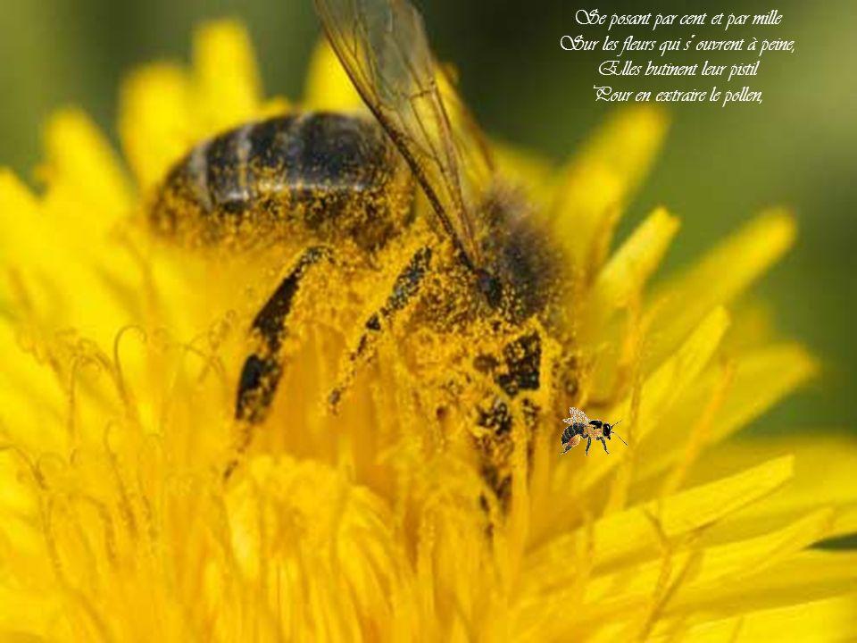 Bzz, bzz, bzz, Bzz, bzz, bzz... les abeilles!