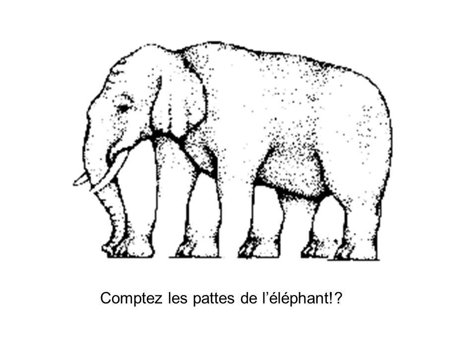 Comptez les pattes de léléphant!?