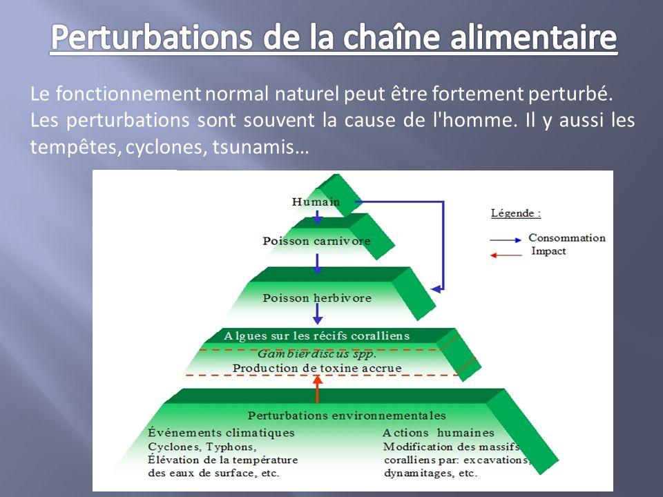 Le fonctionnement normal naturel peut être fortement perturbé. Les perturbations sont souvent la cause de l'homme. Il y aussi les tempêtes, cyclones,