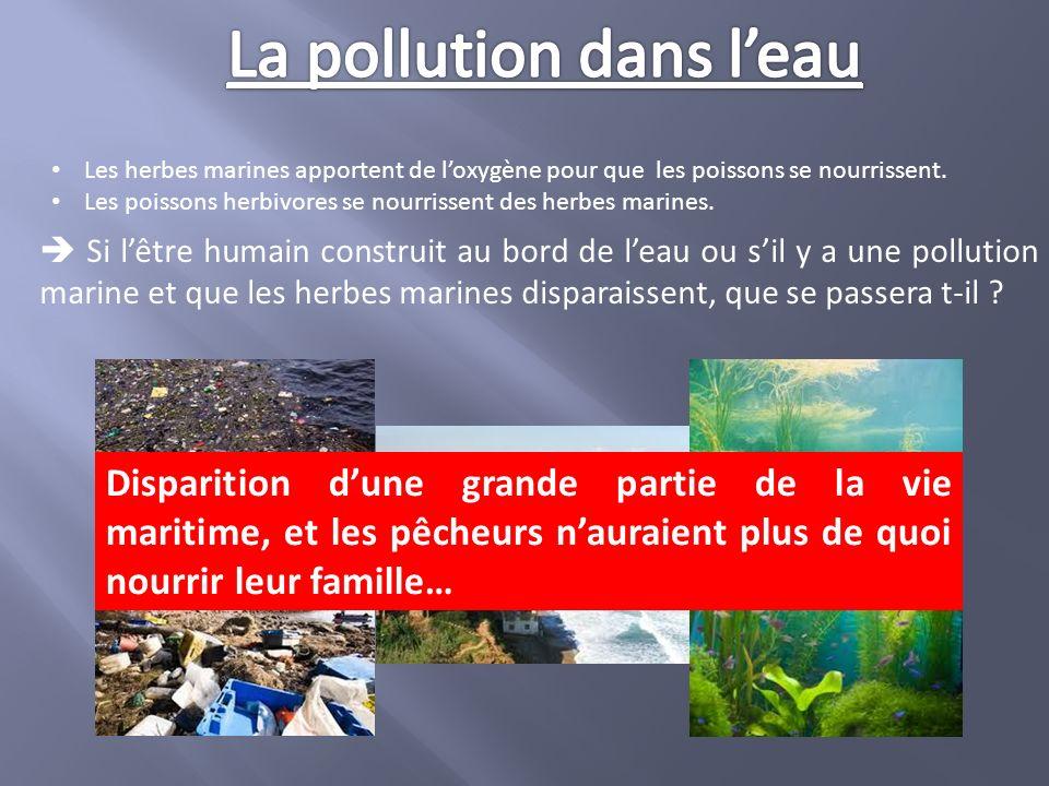 Il est donc essentiel de sauvegarder toutes les espèces vivantes, car la perte de l une d entre elle peut avoir des conséquences très importante sur lenvironnement et donc sur la chaîne alimentaire.