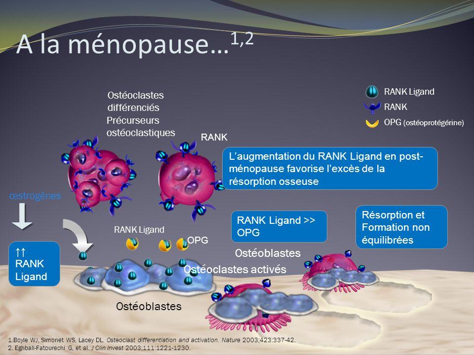 RANK Ligand Précurseurs ostéoclastiques RANK Ligand RANK OPG (ostéoprotégérine) œstrogènes OPG RANK RANK Ligand Ostéoclastes différenciés Ostéoblastes
