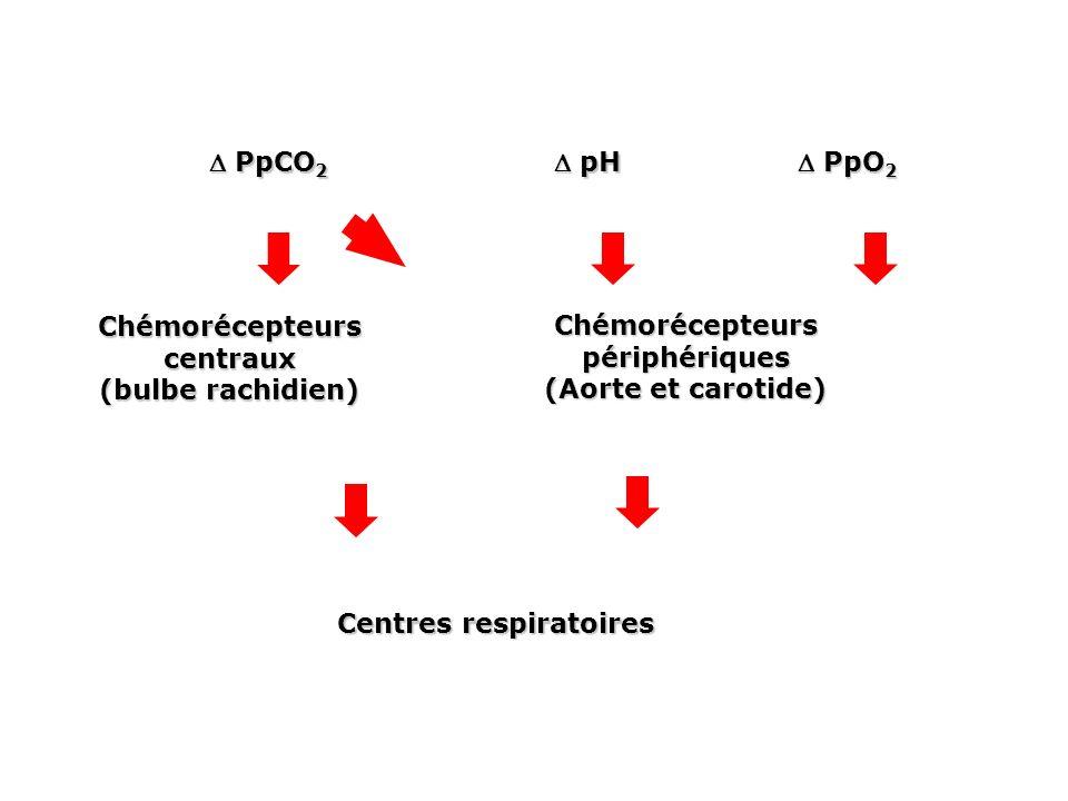 Chémorécepteurs centraux (bulbe rachidien) Chémorécepteurs périphériques (Aorte et carotide) Centres respiratoires pH pH PpCO 2 PpCO 2 PpO 2 PpO 2