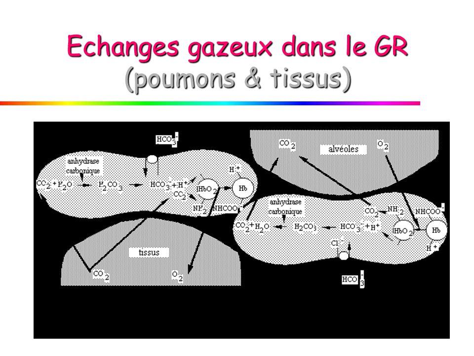 Echanges gazeux dans le GR (poumons & tissus)