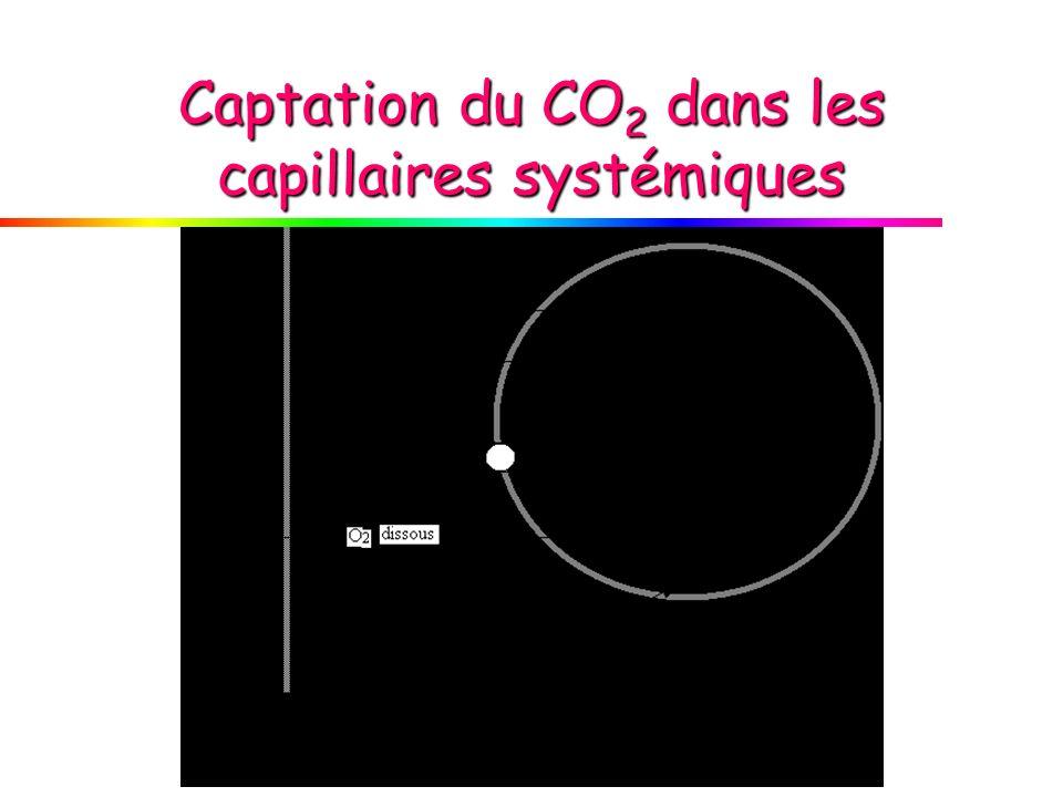 Captation du CO 2 dans les capillaires systémiques