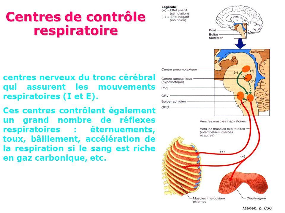 Contrôle de la ventilation Centres de contrôles Bulbe: rythme Protubérance Cortex: volonté Récepteurs 1.Récepteurs bronchopulmonaires Distension (baisse de la FR) Irritation (augmentation FR, toux, bronchoconstriction) Récepteurs J: cloisons alvéolaires 2.Récepteurs nasaux irritation 3.Chémorécepteurs centraux Bulbe dans des zones différentes des centres respiratoires Sensibles variations locales de [H+] dans le LCR transmises par les variations de PaCO2: augmentation = augm FR épuisable 4.Chémorécepteurs périphériques Bifurcation carotidienne / sous la crosse de laorte Sensibles variations de PaO 2, réponse ventilatoire hyperbolique, potentialisée par variations de PaCO 2 Effecteurs Muscles respiratoires IX et X