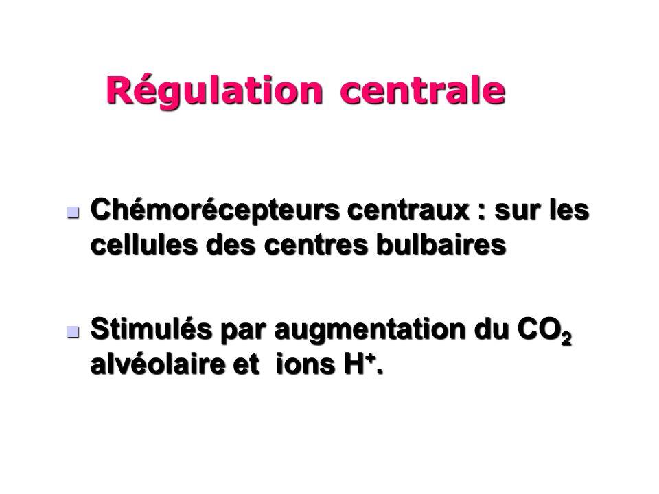 Chémorécepteurs centraux : sur les cellules des centres bulbaires Chémorécepteurs centraux : sur les cellules des centres bulbaires Stimulés par augmentation du CO 2 alvéolaire et ions H +.
