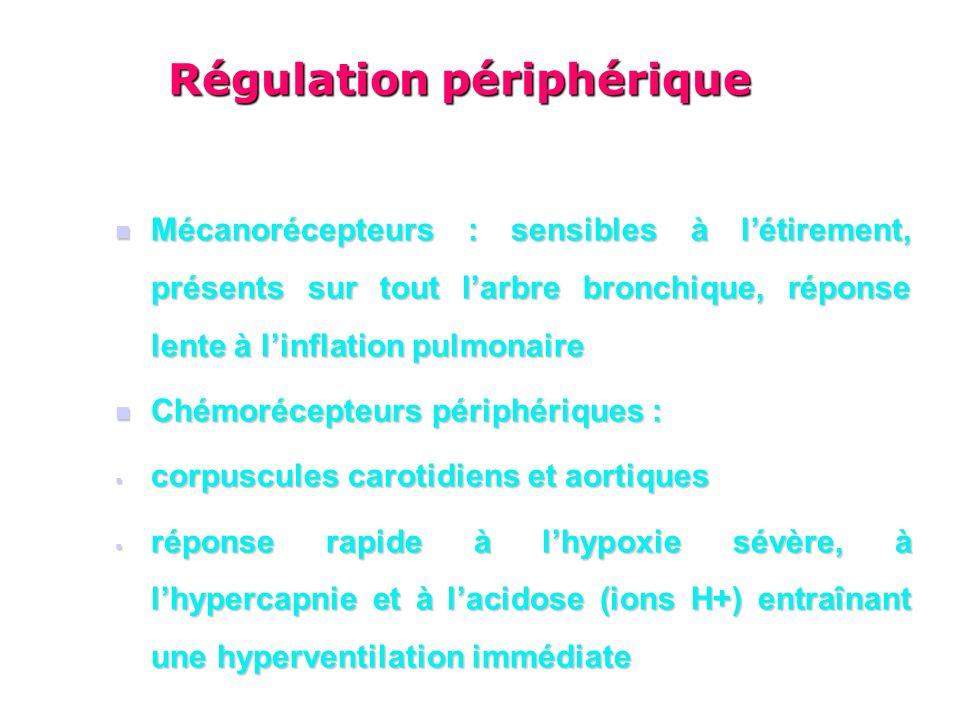Mécanorécepteurs : sensibles à létirement, présents sur tout larbre bronchique, réponse lente à linflation pulmonaire Mécanorécepteurs : sensibles à létirement, présents sur tout larbre bronchique, réponse lente à linflation pulmonaire Chémorécepteurs périphériques : Chémorécepteurs périphériques : corpuscules carotidiens et aortiques corpuscules carotidiens et aortiques réponse rapide à lhypoxie sévère, à lhypercapnie et à lacidose (ions H+) entraînant une hyperventilation immédiate réponse rapide à lhypoxie sévère, à lhypercapnie et à lacidose (ions H+) entraînant une hyperventilation immédiate Régulation périphérique