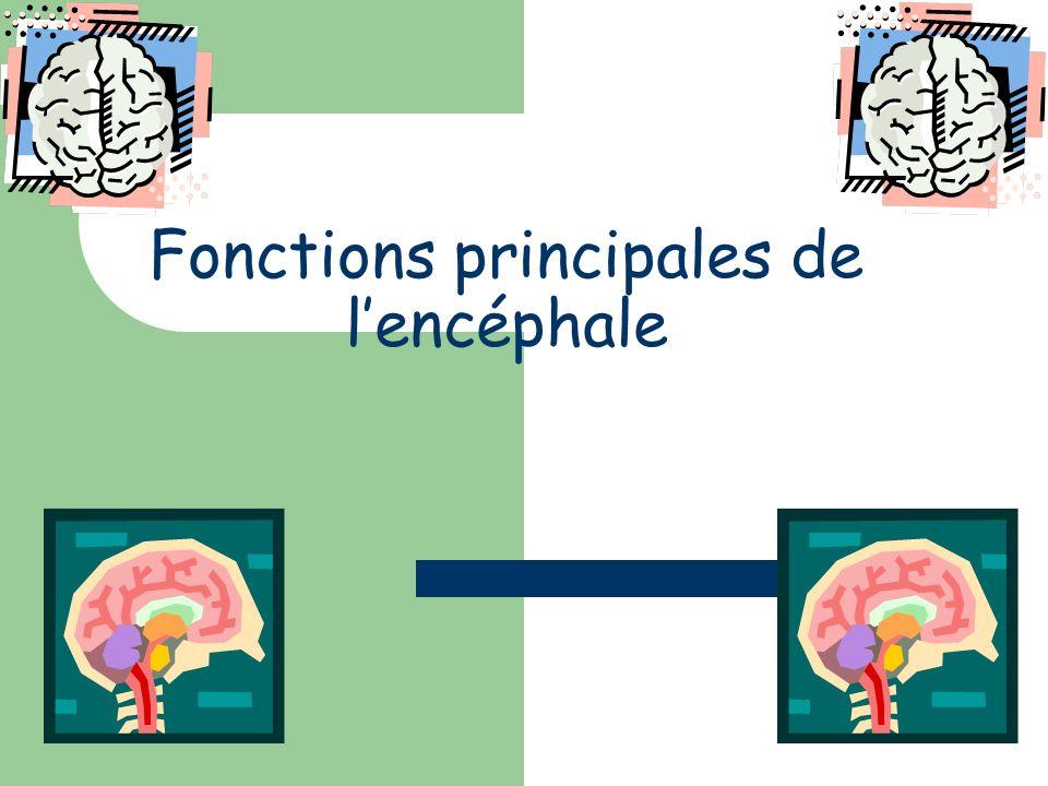 Fonctions principales de lencéphale