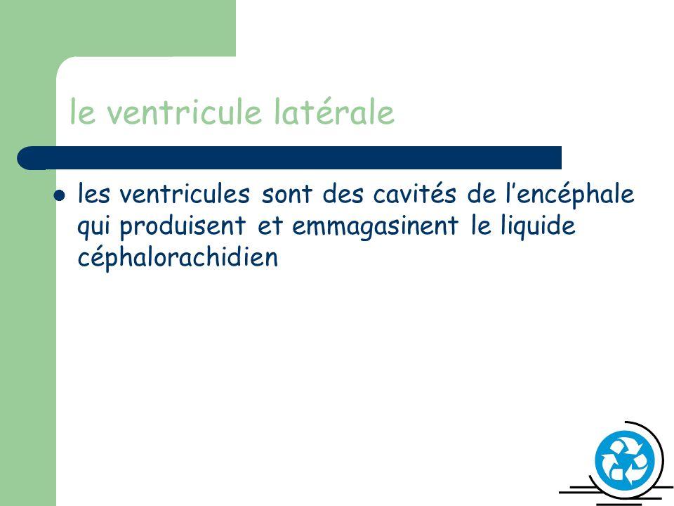 le ventricule latérale les ventricules sont des cavités de lencéphale qui produisent et emmagasinent le liquide céphalorachidien